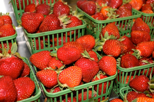 Local Strawberries!